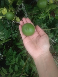 Picking Lemons