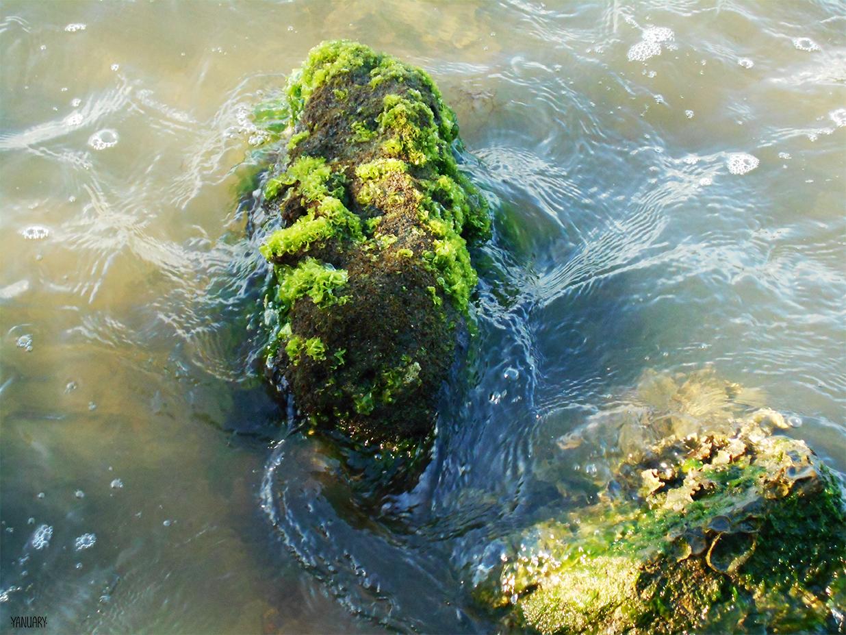 Ballast Point_seaweed_signed.jpg