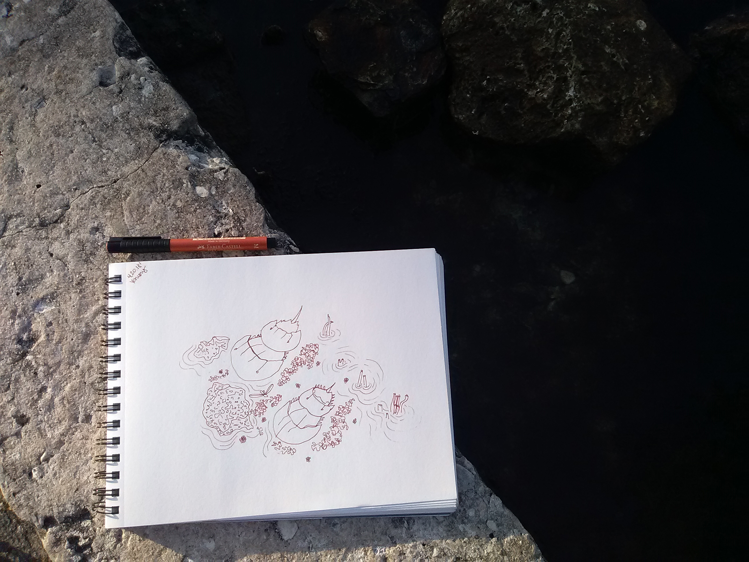 Ballast_point_park_drawing